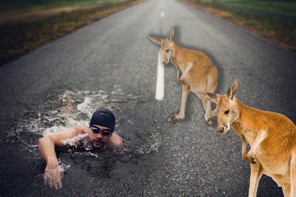 Swim On Asphalt Kangaroo